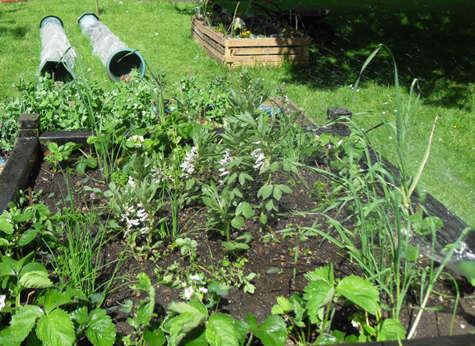 The garden at Crossacres Resource Centre, Wythenshawe.